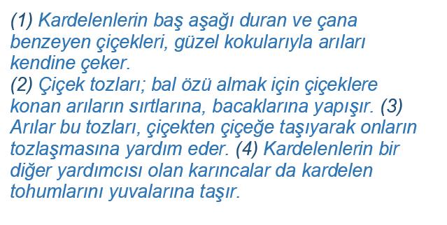 cati 2021 LGS Türkçe Fiilde Çatı Test Çöz