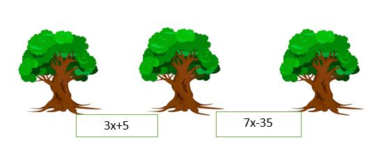 cebir 7. Sınıf Matematik Eşitlik ve Denklem Test Çöz