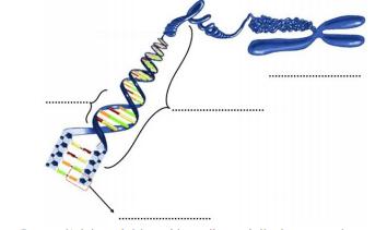 dna 2021 LGS Fen Bilimleri DNA ve Genetik Kod Test Çöz