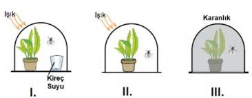 fotosentez 3 2021 LGS Fen Bilimleri Enerji Dönüşümleri Fotosentez Test Çöz